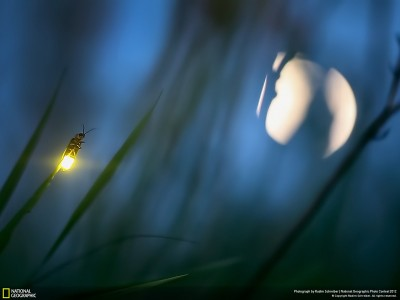 Krijesnica